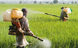Pesticides & Formulations